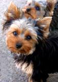 IMG_5296 dogs.jpg