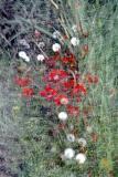 slides_1024_05_pb.jpg - Abstract Flower