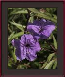 Flower #21