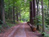 Schwarzwald Forest