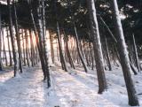 Bright morning through trees