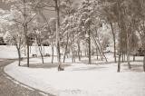 Park Of My City