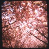 4.30 pink.tif.jpg