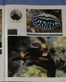 Galeria de Fotos de nudiobrânquios
