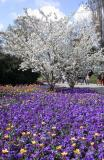 Blooming Mannheim