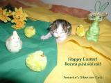 Happy Easter!  - Iloista pääsiäistä!