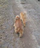 Marching with Sofi, the dog friend.