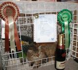 Cedi became European Champion. Congrats!