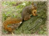 Mam I aint got time to be posing. I gotta gather my nuts.jpg(124)