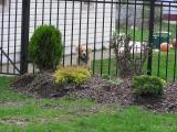 Toby.   I added this bed last fall, hoping to screen the front view from the barky dogs.