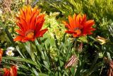 13 April 04 - Spring Flowers?