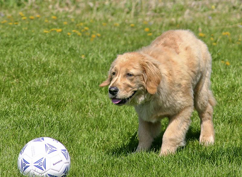 Goody!  A ball!
