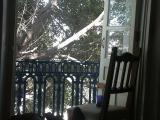 2606 Chair, balcony, tree.jpg