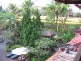 Ubud, Artini 2, looking from my room at rice fields