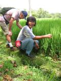 Ubud rice field wakl, Bruce and local guide