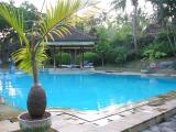 back to Lovina, Hotel Angsoka pool