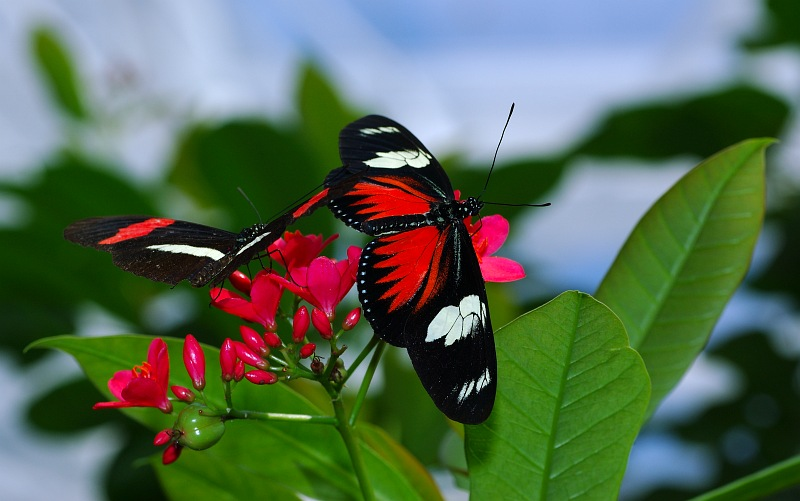 Doris butterfly.jpg