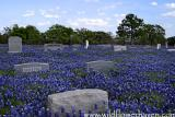 Rest in Bluebonnet Heaven