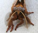 Moth Mugshot