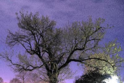 Nighttime Tree Painting.jpg