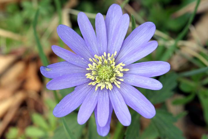 Purple Flower2.jpg