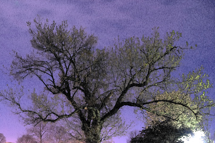 Nighttime Tree Painting.jpg