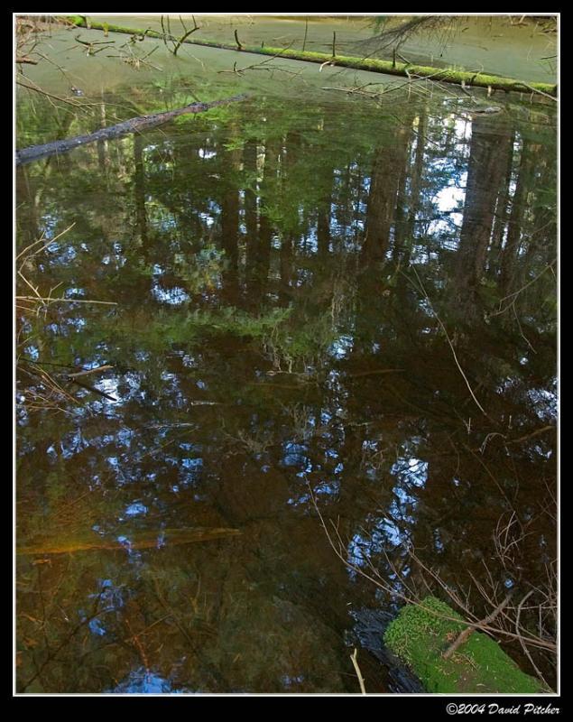 Bog Relfections