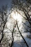 Reaching to the sky