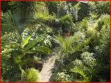 Bobs jungle (UK)