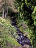 Diana's Grove on Blair Castle grounds.