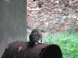 Here Kitty Kitty.jpg