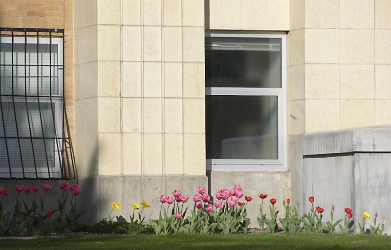 Tulips LA Bldg ISU DSCN0798.jpg