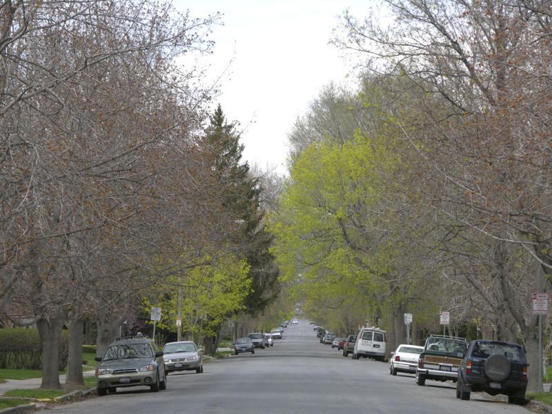 Spring on 7th Ave DSCN0894.jpg