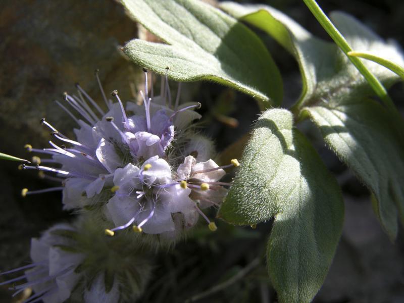 Purple Flowers DSCN1382.jpg