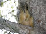 Fine Arts Squirrel DSCN0903.jpg