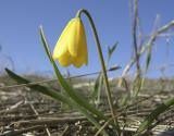 yellow bell DSCN0946.jpg