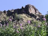 West Fork Mink Creek Trail with Fireweed Olympus C-750 bild 037.jpg