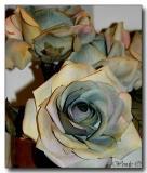 Flower in the Ladies' Room