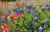 Central Texas  28.jpg