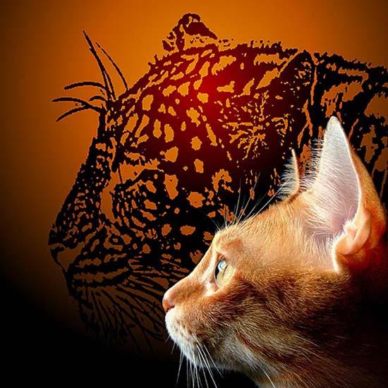 Cat Shadows.jpg