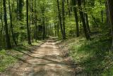 Strasse im Frühlingswald
