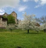 Schloss Wildegg im Frühling