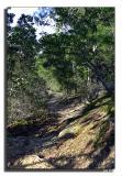 Bluff Trail.jpg