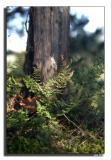 Ferns  Cedar.jpg