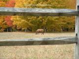 Equine Autumn