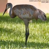 Big ass bird stock photo #1074