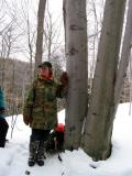 Sue & Bear Tree
