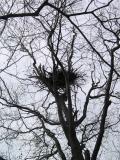 Bear Nest
