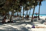Palm shaded Jumairah Beach Park