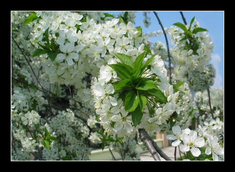 spring092.jpg